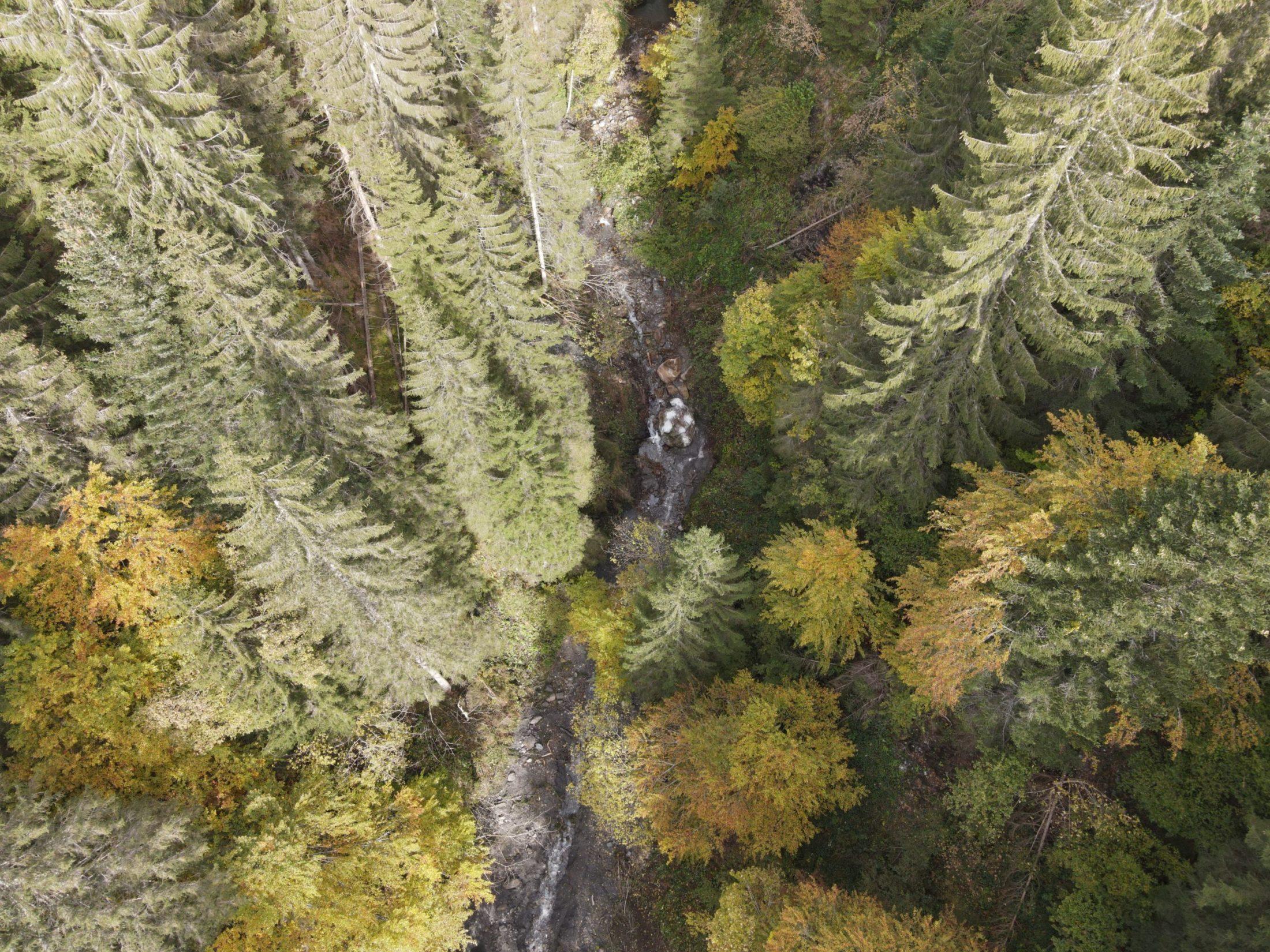 Drohnenaufnahme eines Wildbaches